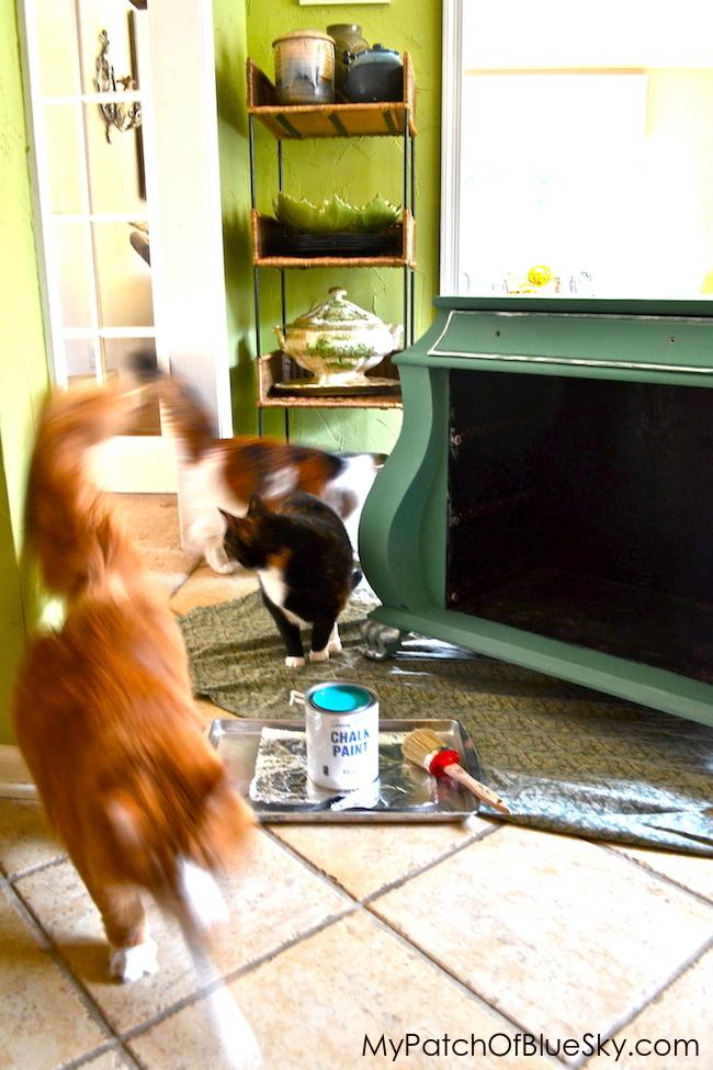 Chalk Paint®, Annie Sloan, cat, calico, adventures