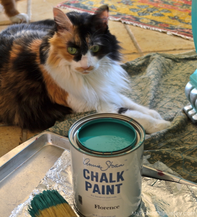 cat, calico, adventure, Chalk Paint®, Florence