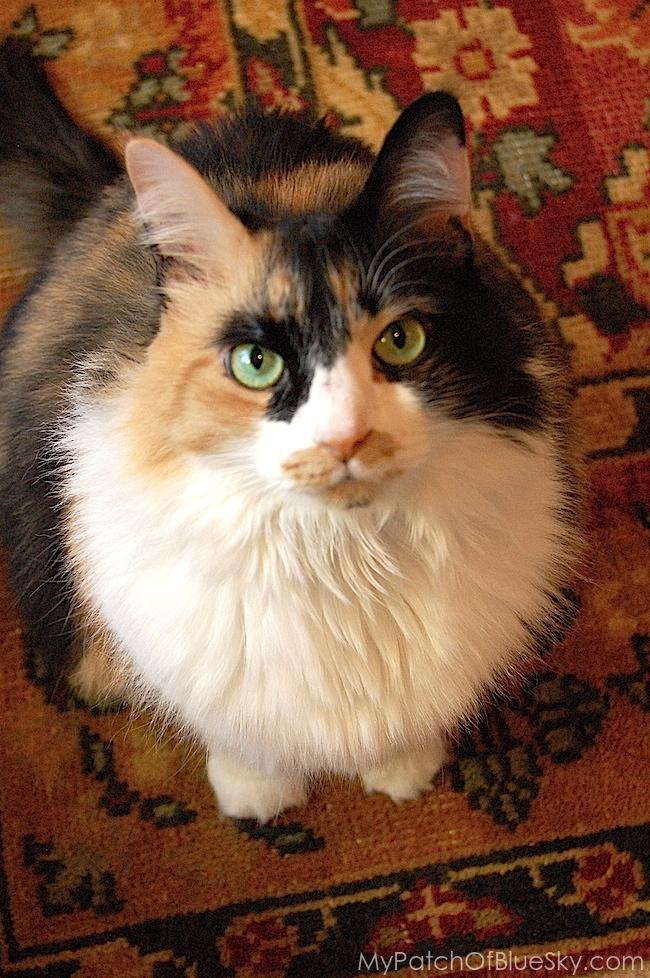 cat, calico, Chalk Paint®, adventures, Florence