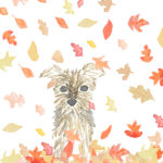 Yorkie Fall Leaves