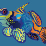Tropical Fish Illustration