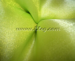 apple green organza