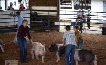 Swine show meigs county fair 2020