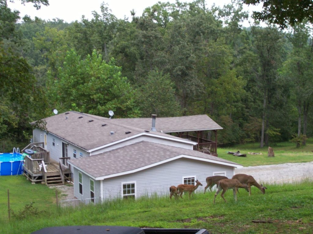 The deer walk right thru the property