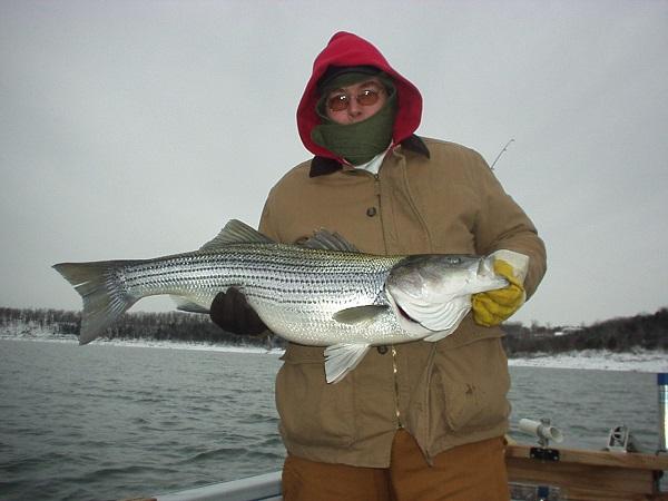Fisherman with big striped bass