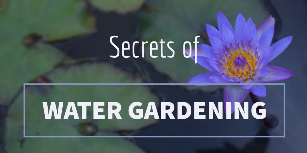 Secrets of Water Gardening