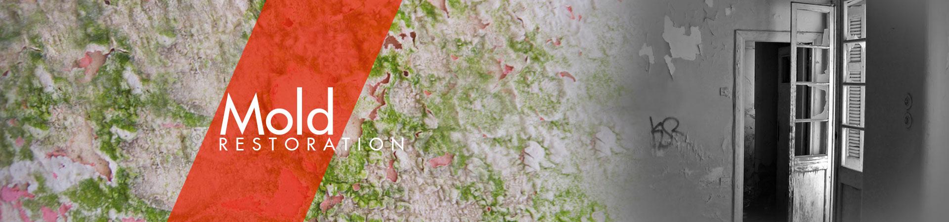 disaster restoration - mold remediation