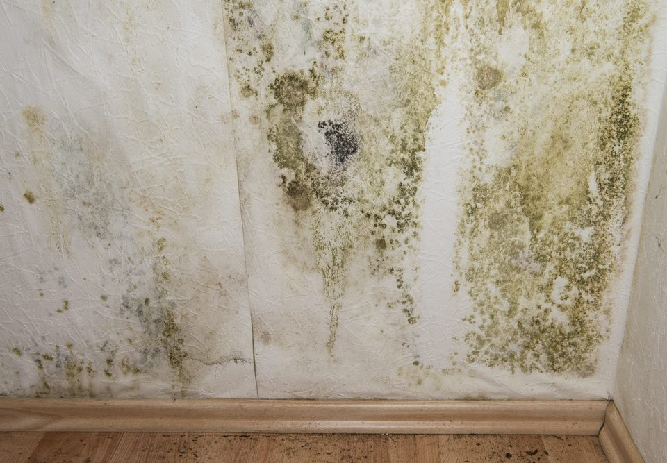 home mold damage