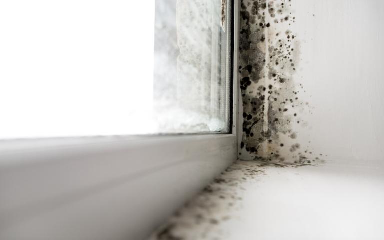 Mold Damage around Window Seal