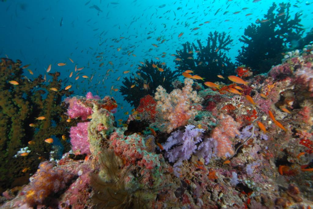Maldives Coral Vista