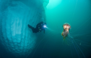 Iceberg, diver, and jellyfish
