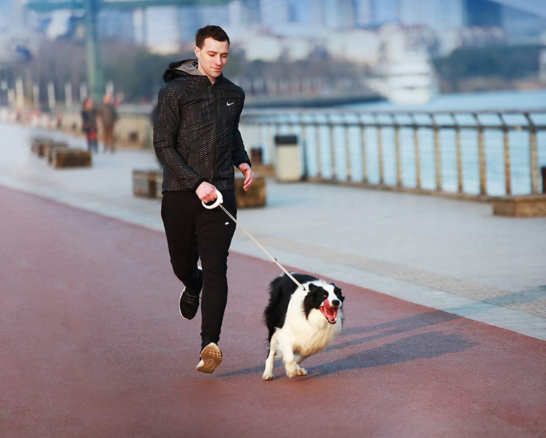 PetKit Go Smart Pet Leash
