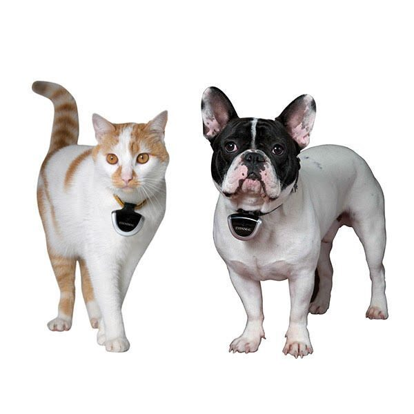 shop pet technology products for cats & dogs!