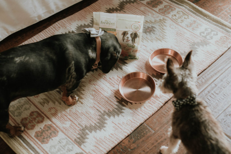 FEEDING OUR PETS AN ALL NATURAL, FRESH FOOD OPTION IS SO KEY. READ MORE TO FIND OUT HOW WE FOUND THE BEST FOOD FOR OUR PETS.
