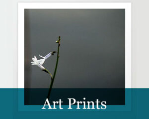 Photography-Art Prints