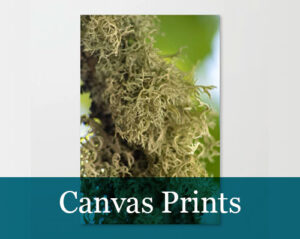 Photography-Canvas Prints