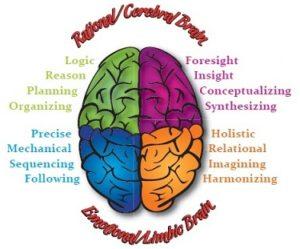 Quadrant Brain Model