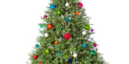 christmas-tree-isolated_venplz