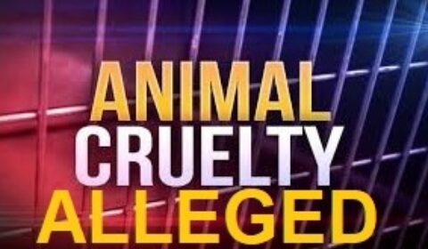 animal cruelty logo