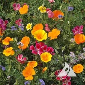 Northwest Wildflower Mix