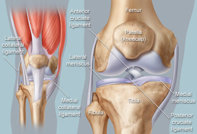 joint mobility illustration