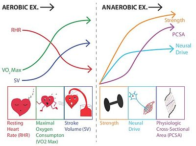 aerobic vs. anaerobic exercise for sailing fitness