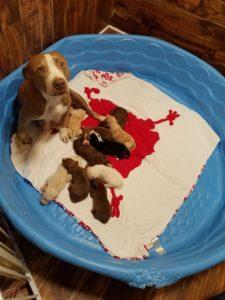 Athena & babies- Mid July