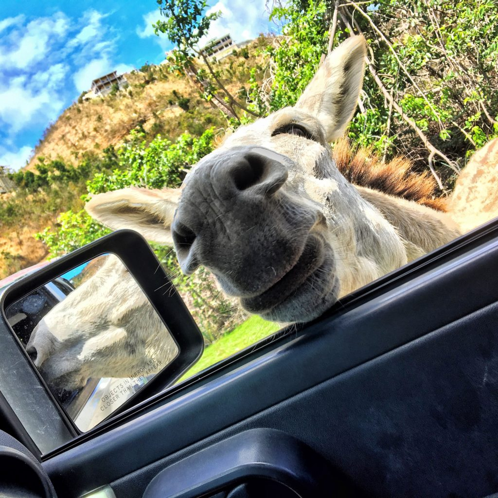 St John Donkey jeep tour