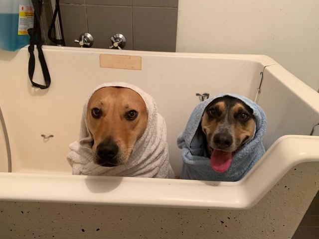 Hydrobath pic
