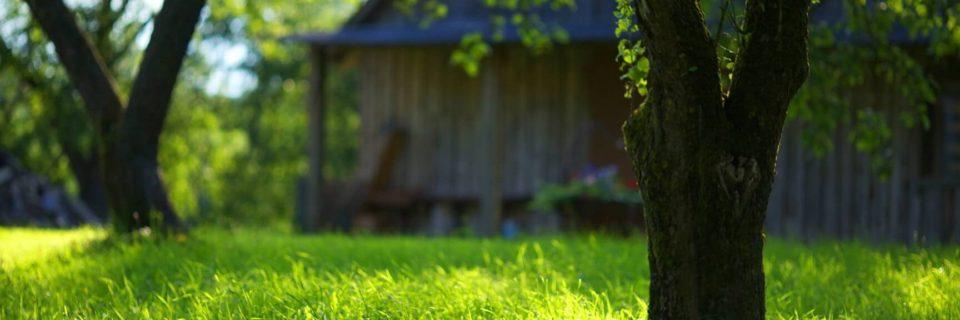 Summer Garden Green Grass