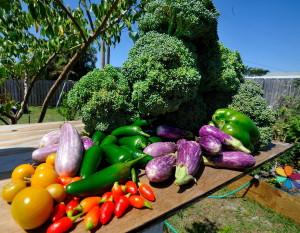 broccoli tomartoes