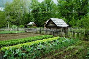 Vegetable Garden with gourd bird houses. Smoky Mountain National Park