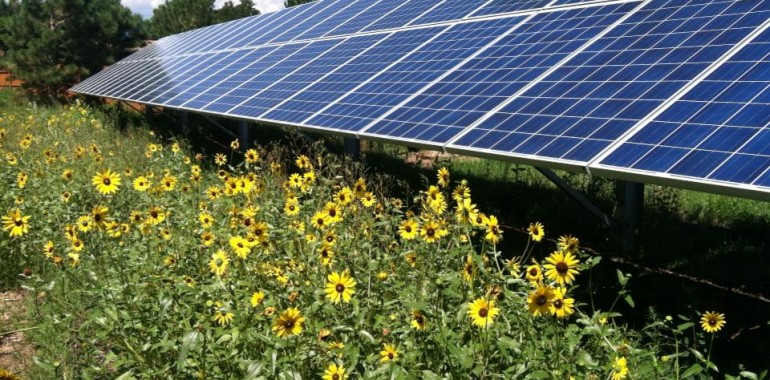 Solar panels in front of sunflowers