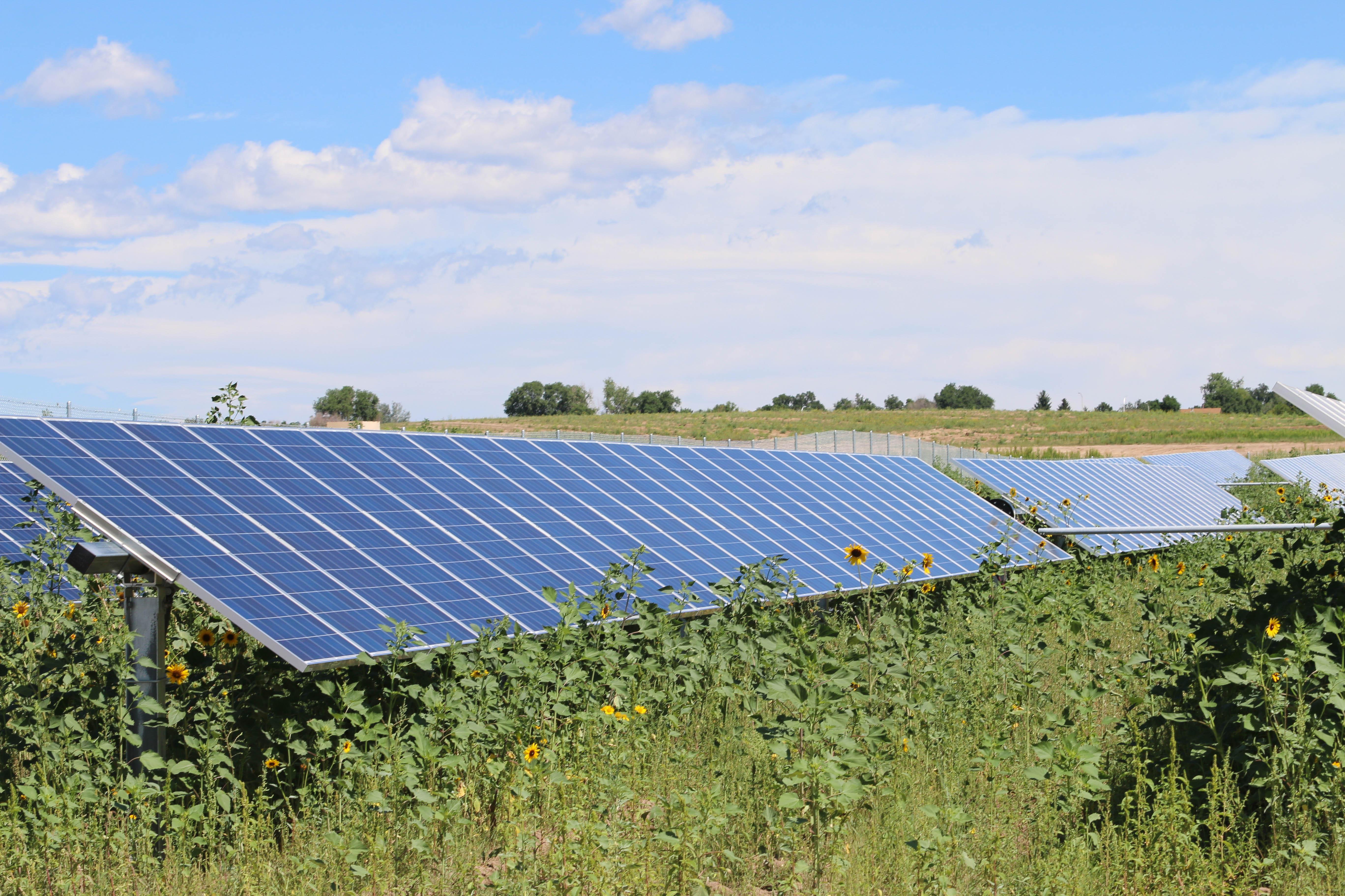 SunShare Launches 10 MWs of Community Solar Gardens in Colorado