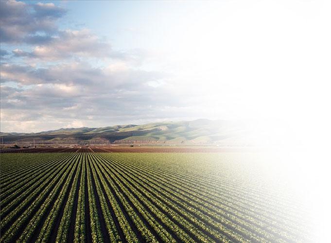 A wide field of farm land