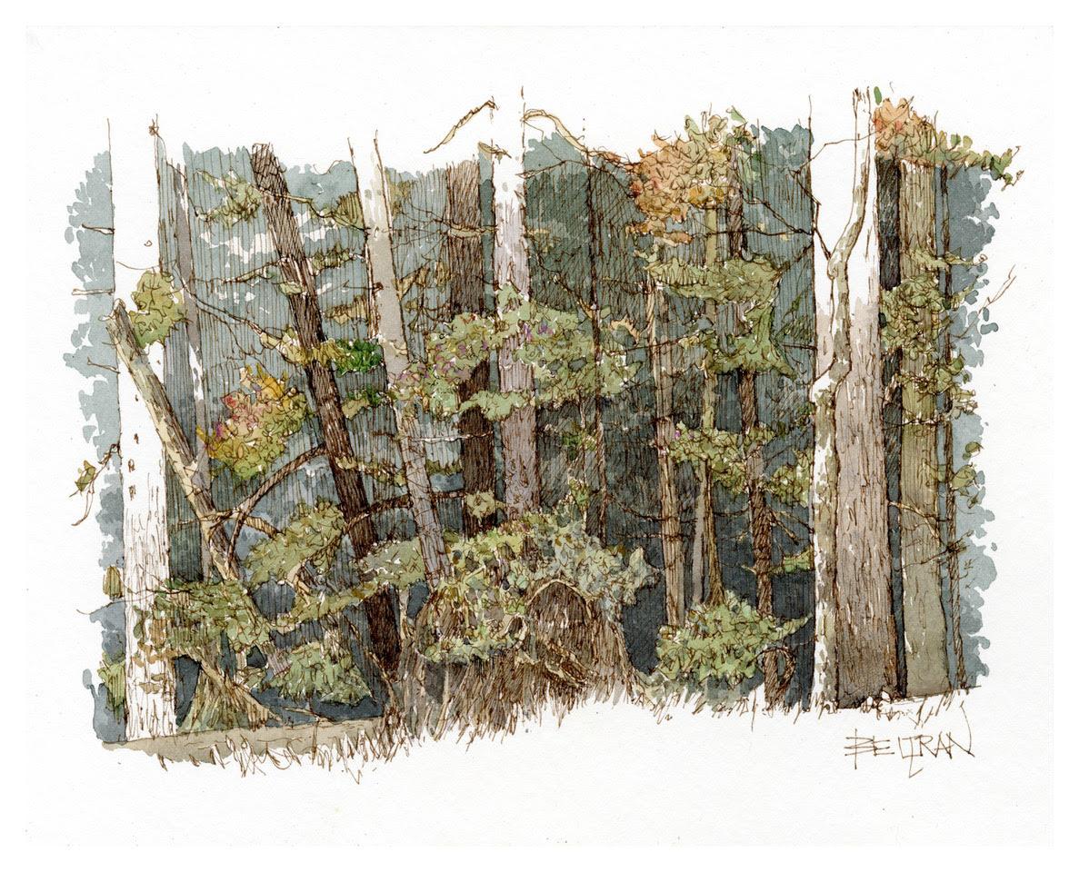 Victor Beltran: Cook Forest