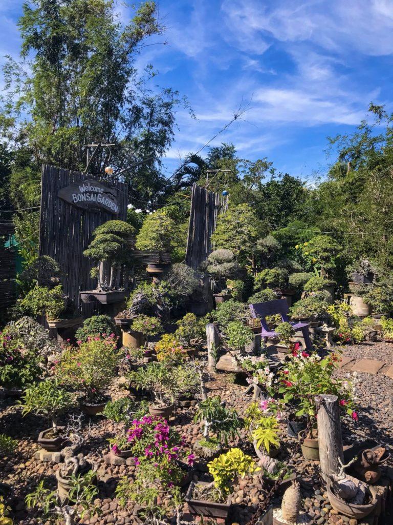 The bonsai garden in hidden garden of Vigan