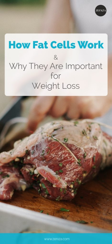 How Fat Cells Work and Why Are They Important for Your Weight Loss