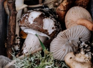 Healthy Eating Series All About Mushrooms in Your Diet