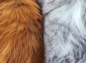 How the Fur Industry Harms the Environment Massively