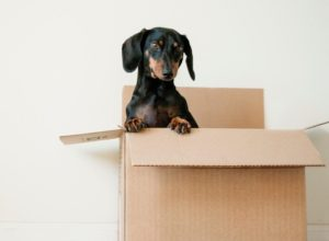4 Tips to Help You Adjust After Moving to a New City