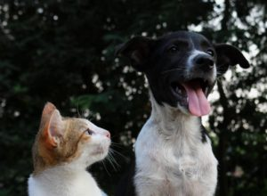 What You Should Know About Dental Care for Your Fur-Babies
