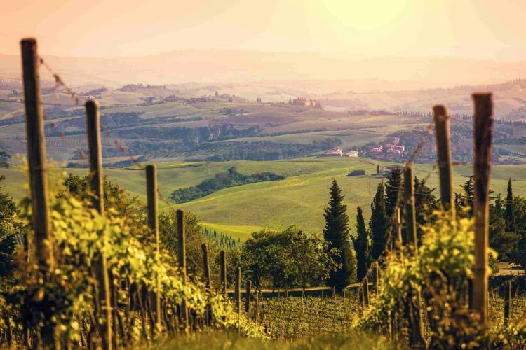 Private Brunello wine tour
