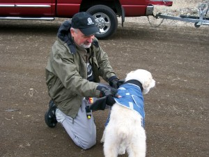 Fly Fisherman suiting up his dog