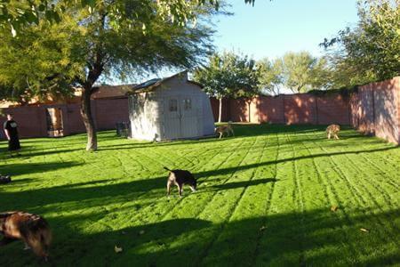 Yard 6 freshly cut.
