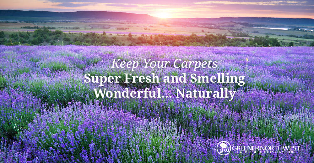 The Complete Carpet Care Guide: Keeping Your Carpets Super-Fresh and Smelling Wonderful