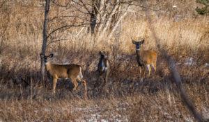 Famiy_of_Deer