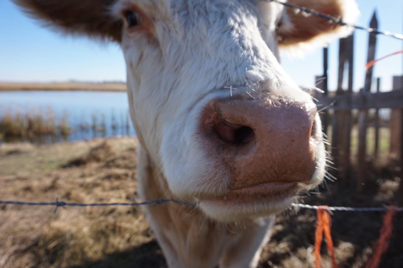 How Cow I help you?
