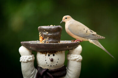 Photographing birds at a feeder in the rain