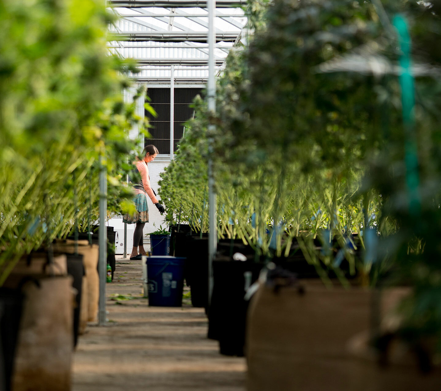 How to Weather COVID and Improve Cannabis Energy Efficiency Now